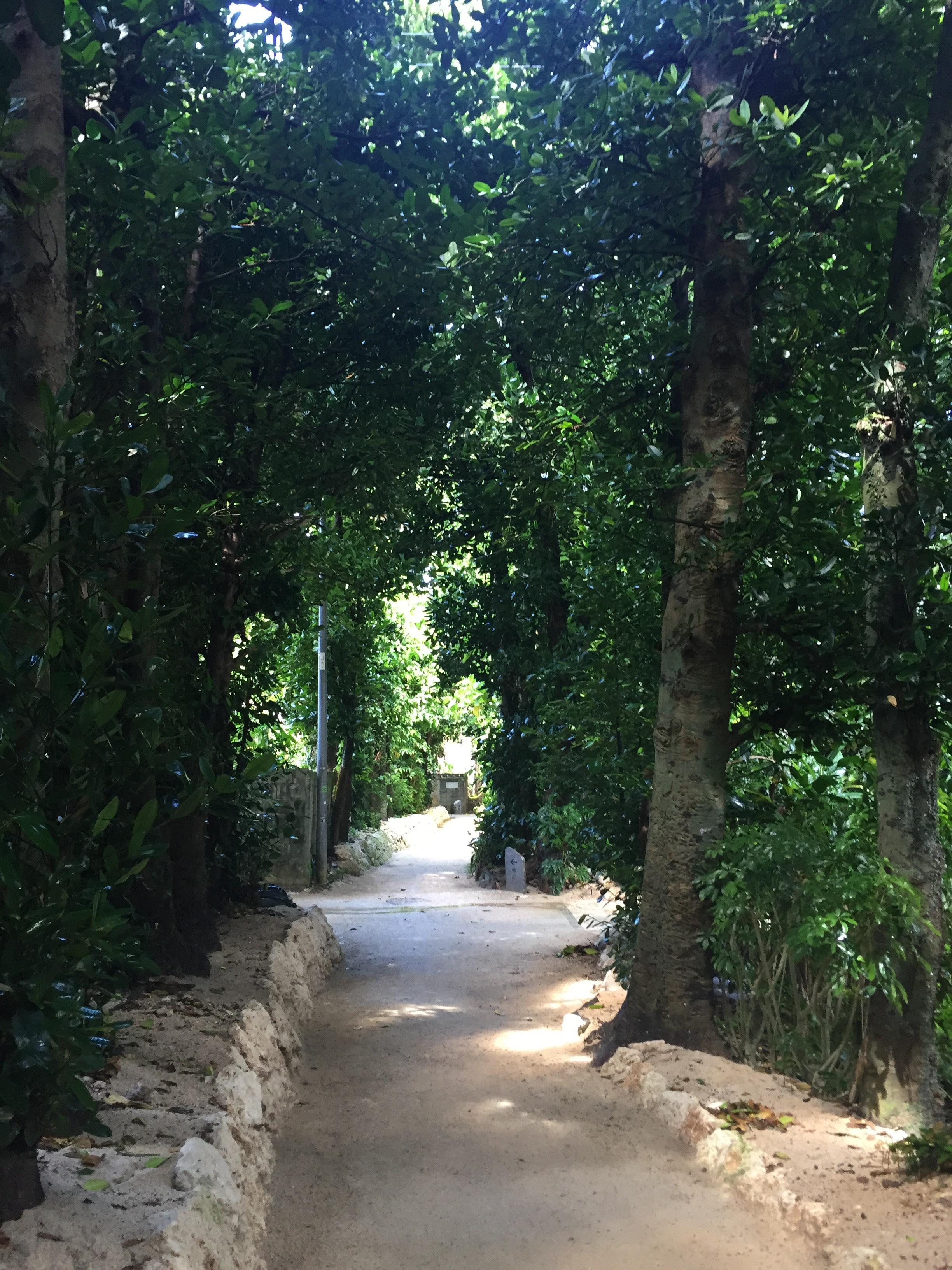 (日本語) 沖縄観光スポット① 備瀬のフクギ並木